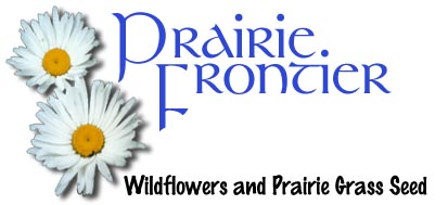 Wildflower and prairie grass by Prairie Frontier