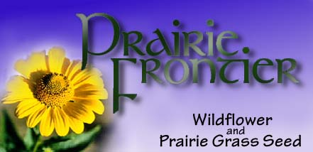 Wildflower Greeting Cards by Prairie Frontier-visit our Homepage