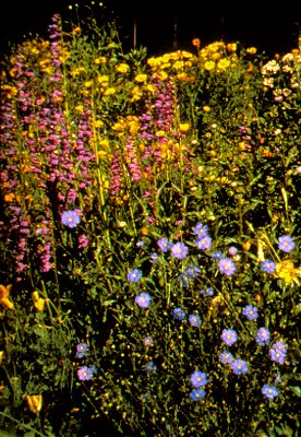 regional wildflower mixes by prairie frontier